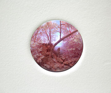 Study for Pink Forest