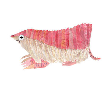 The Pink Fairy Armadillo