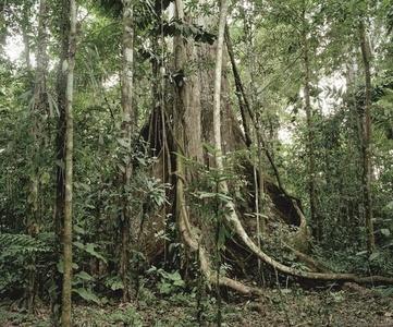 Ceiba et jardin de plantes médicinales