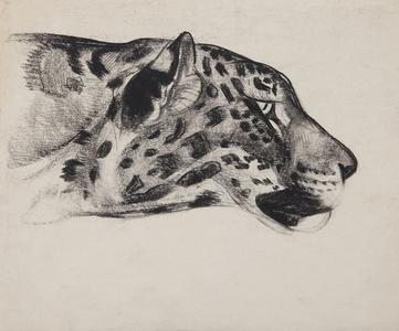 Big Cats: Leopard