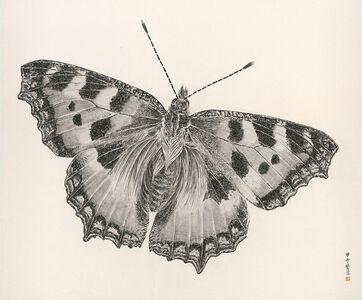 Butterfly 2014-7