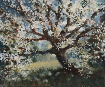 Cherry Tree, Central Park