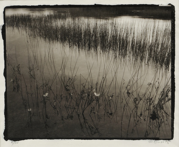 Feathers and Water Grasses, Acadia, Maine