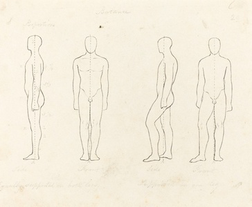 Extent of Motion, Front and Side View Equipoised, Supported on One Leg