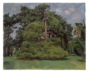 Pine Trees in Loose Park XVII