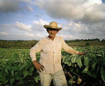 Man in a Tobacco Field I, Pinar del Rio