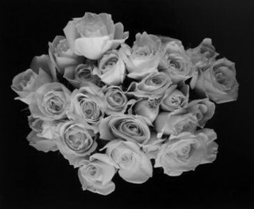 Large Rose Buds, Carmel, CA