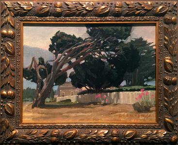 Windswept Pine on Little Lake (Mendocino)