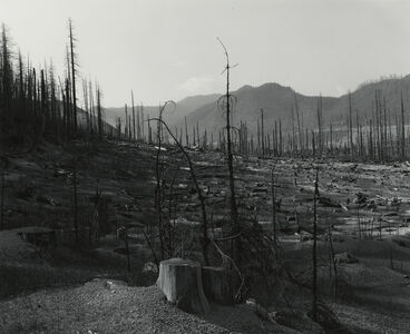Old Clearcut in Clearwater Creek Valley