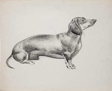 Dogs: Daschund