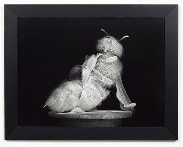 Dead Bee Portrait #6