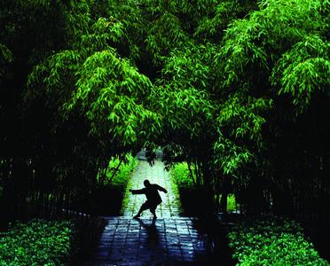 Shi Yan Lang, Tong Jian Quan (Through the Shoulder Fist)
