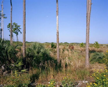 Trees, Nature Preserve, Ave Maria, Florida
