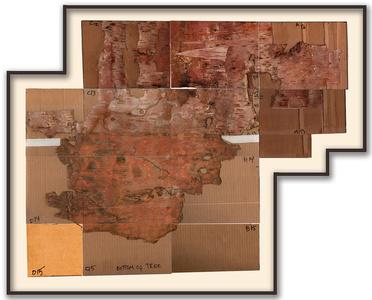 Bark Framed #5