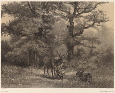 Cerfs au Gagnage