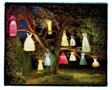The Dress Lamp Tree, England