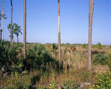 Trees, Nature Preserve, Ave Maria, Florida