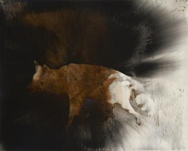Coyote #5