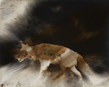 Coyote #6