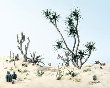 Cactus Mussard