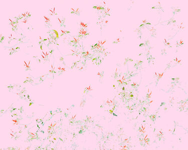 Wildflowers C1