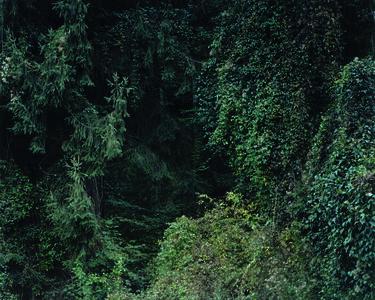 Baumstück 2