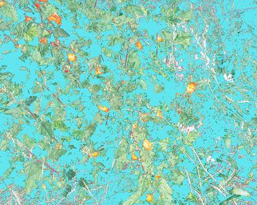 Wildflowers (PVGM1)