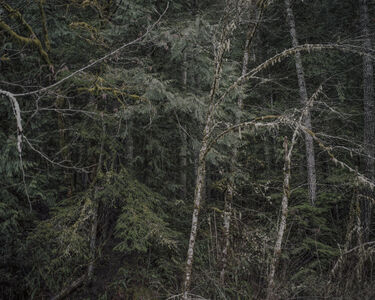 From the series Darkwood, #5