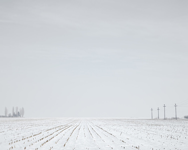Winter Corn Field (near Turda, West Romania), 2012