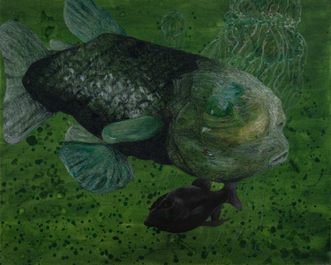 Wanderers of the Abyssal Darkness.Pacific Barreleye Fish S1706