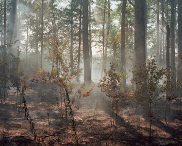 Natural Burn III
