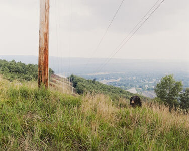 Hillside from the series Domesticated