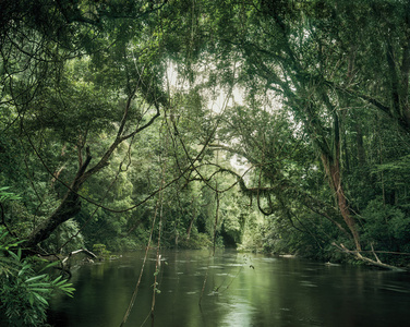 Primary forest 01, waterway, Malaysia