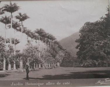 Jardin Botanique allée de côté, Rio de Janeiro