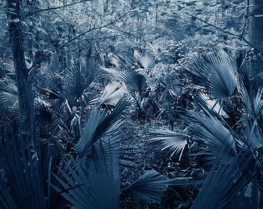 Blue Bayou #4