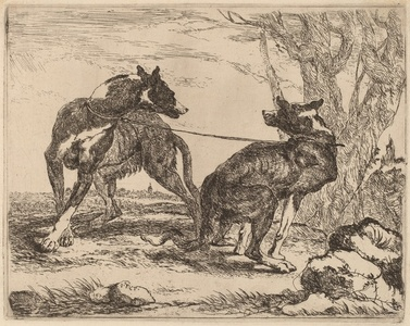 Two Greyhounds, Leashed and Facing Each Other