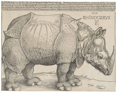 The Rhinoceros (B. 136; M., Holl. 241; S.M.S. 241)