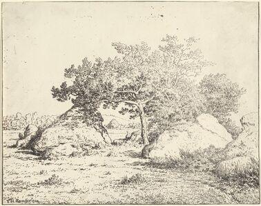 Le Cerisier de la Plante a Biau