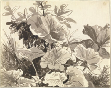 Study of Coltsfoot Leaves