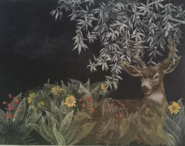 Black-tailed Deer in Green, Mule Ears and Red Larkspur, Under California Bay Laurel