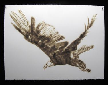 Eagle (3)