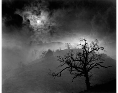 Stark Tree, 1956