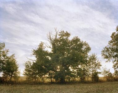Mother Tree, Kentucky