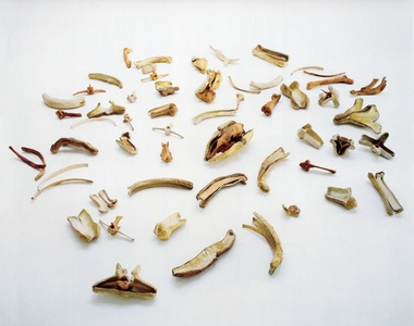 Bones and Their Containers (To Martin Cassidy)