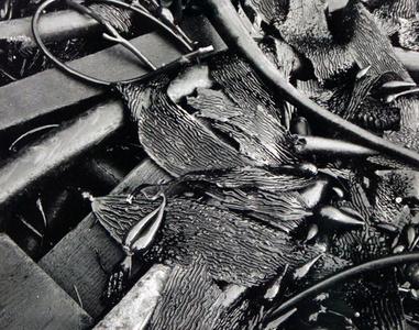 Untitled (Kelp)
