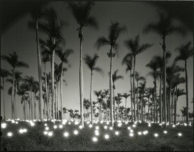 #356 Palm