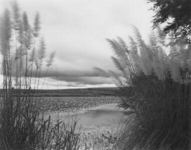 Paisagem com Lírio da Lagoa