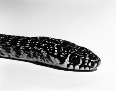 """Snake"" from the series ""Almost There"""