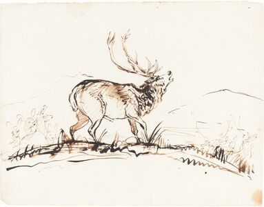 A Bellowing Stag