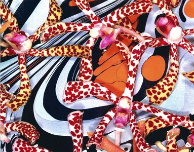 Tiger Orchid Orgy